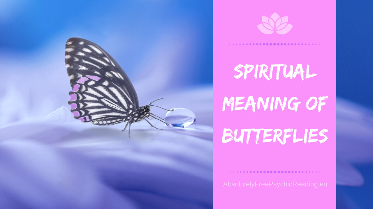 What Does It Mean When A Butterfly Lands On You – Spiritual